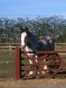 Paddy came to us for feet handling training - read more below.